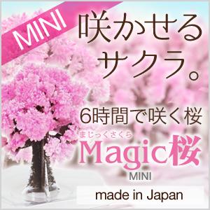 マジック桜ミニ